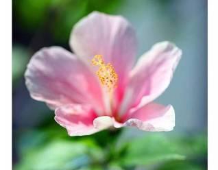 flower of gratitude2