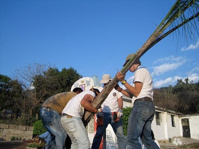 setting up a tree in Malinalco garden